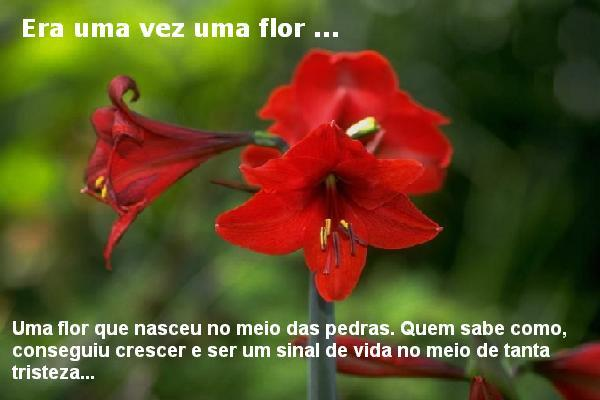 A flor da amizade