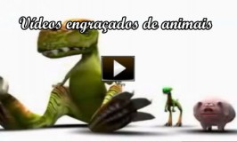 Vídeos engraçados de animais