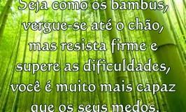 Seja como os bambus